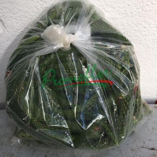 Araucaria Bags