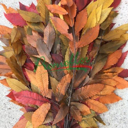 Castanea Autumn Preserved