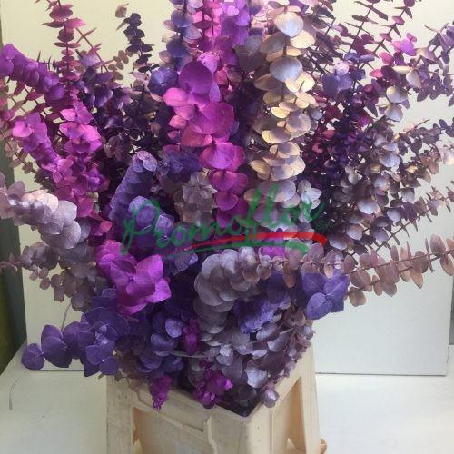 Eucalyptus Baby Blue Metallic Purple Mix
