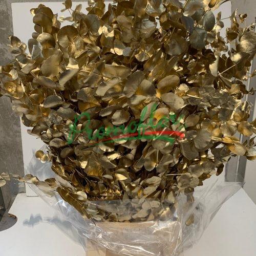 Eucalyptus Cinerea Gold