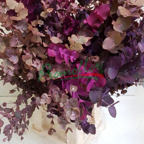 Eucalyptus Cinerea Purple Mix