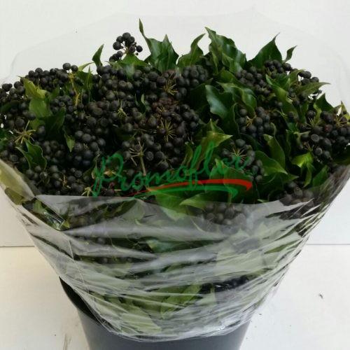 Hedera Helix Black Berries