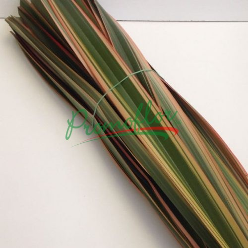 Phormium Red Absorbed