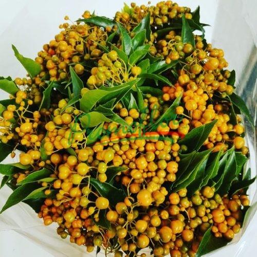 Pittosporum Rhombifolia (Auranticarpa)
