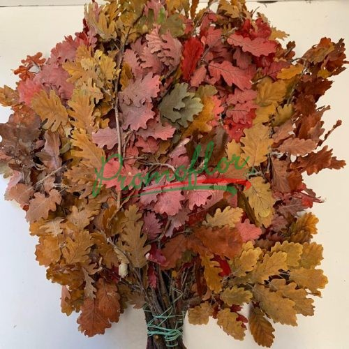 Quercus Autumn Preserved