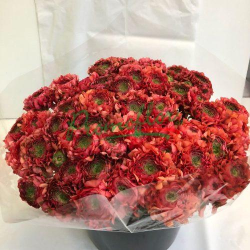 Ranunculus Pon Pon