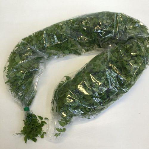 Asparagus Medeoloides