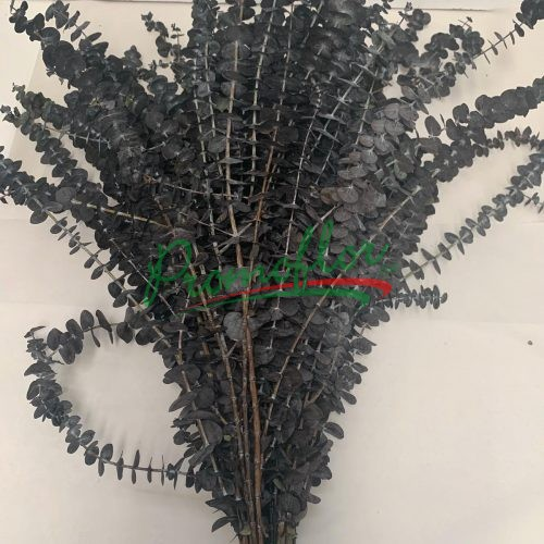 Eucalyptus Baby Blue Black Preserved