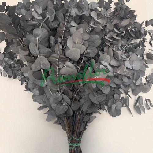 Eucalyptus Cinerea Black Preserved