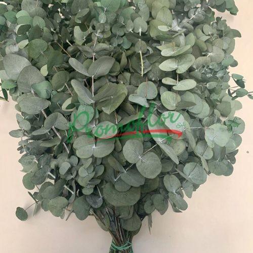 Eucalyptus Cinerea Green Preserved