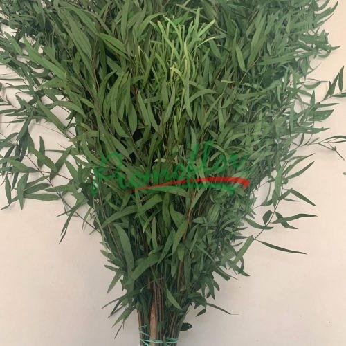 Eucalyptus Nicholii Green Preserved