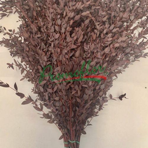 Eucalyptus Parvifolia Red Preserved