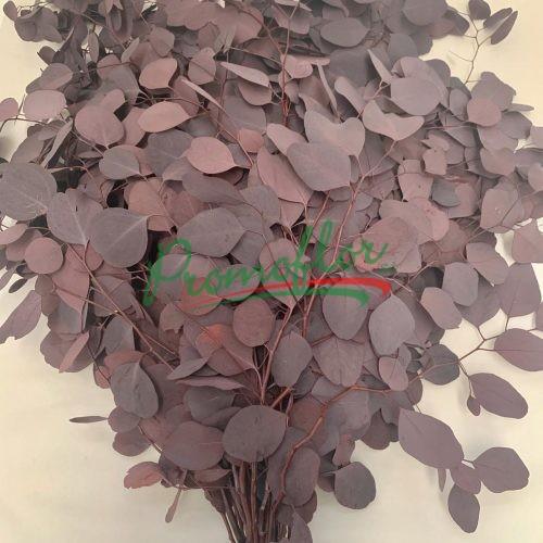 Eucalyptus Populifolia Red Preserved