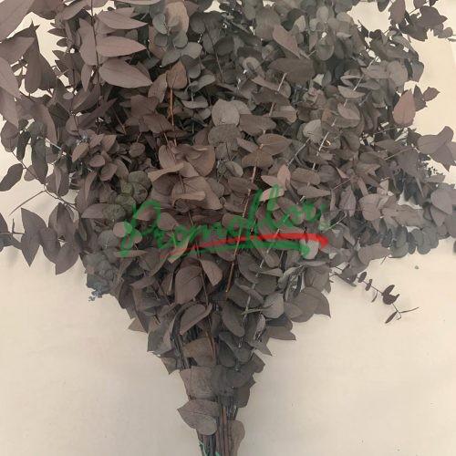 Eucalyptus Stuartiana Black Preserved