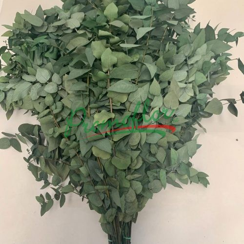 Eucalyptus Stuartiana Green Preserved