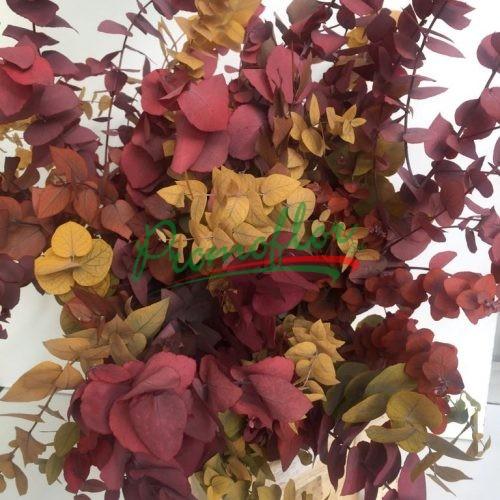 Eucalyptus Stuartiana Autumn Preserved