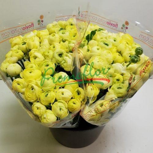 Ranunculus Elegance Cream