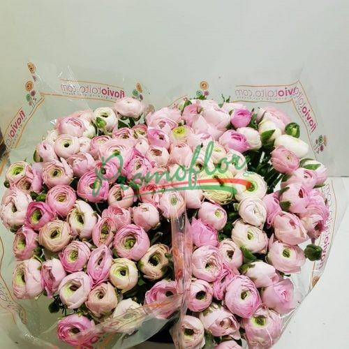 Ranunculus Elegance Pink