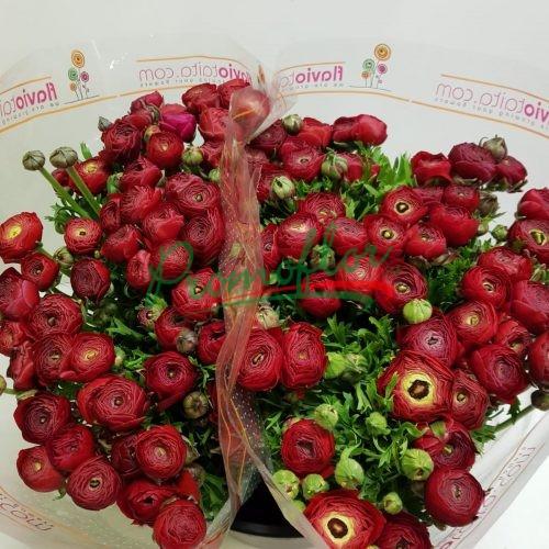 Ranunculus Elegance Red