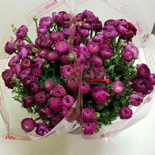 Ranunculus Elegance Violet