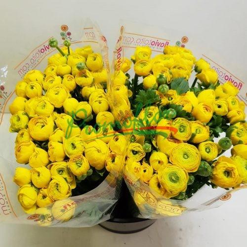 Ranunculus Elegance Yellow