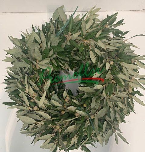 Quercus Ilex Crown