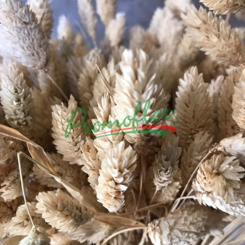 Phalaris Dry Natural
