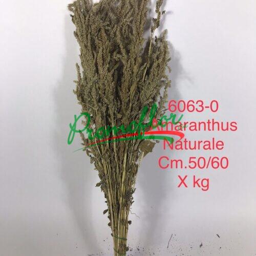Amaranthus Natural
