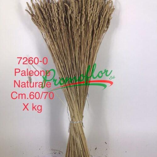 Paleone Natural